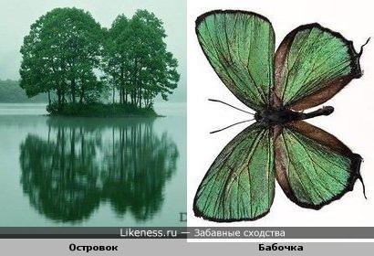Островок и бабочка