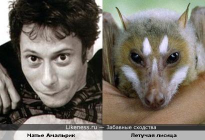 Матье Амальрик и летучая лисица
