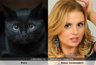 Котэ похожа на Анну Семенович