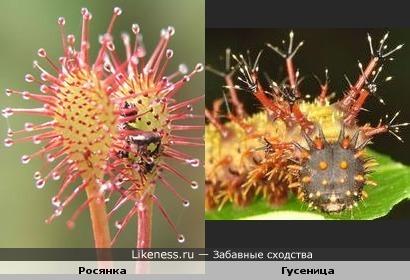 Убийца насекомых и убийца растений