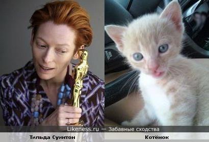 Тильда Суинтон и котёнок
