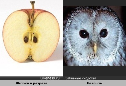 Яблоко в разрезе похоже на неясыть