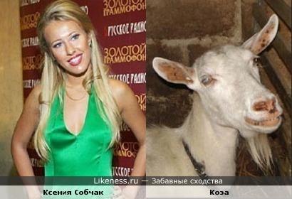 Ксения Собчак похожа на козу