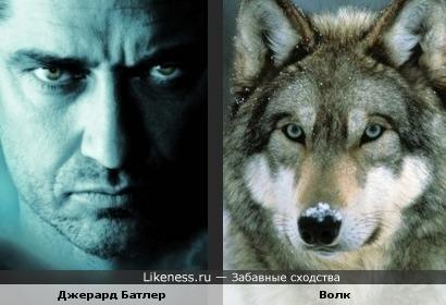 Есть в нем что-то от волка