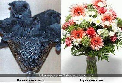 Ваза с котятами похожа на букет цветов