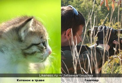 Котенок в траве похож на снайпера
