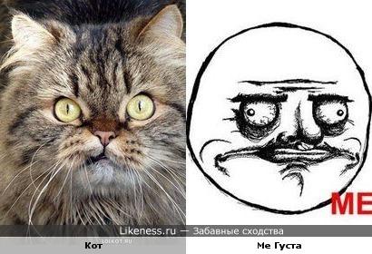 Кот похож на Ме Густу