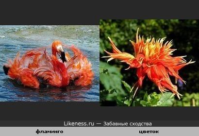фламинго похож на цветок