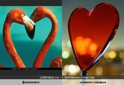 фламинго и символ сердца