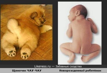 Щеночек похож на новорожденного человечка в позе лягушки