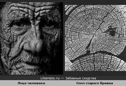 Лицо старика похоже на старое дерево