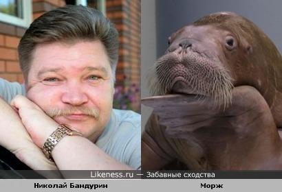 Николай Бандурин похож на моржа