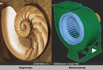 Наутилус похож на вентилятор