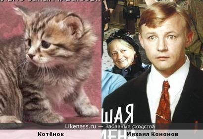 Котёнок чем-то напомнил Михаила Кононова