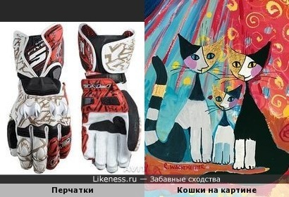 Мотоциклетные перчатки и кошки Розины Вахтмайстер
