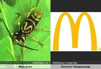 Рисунок на теле жука усача схож с логотипом Макдоналдс.