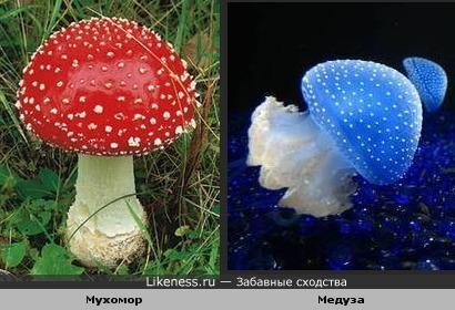Мухомор похож на медузу