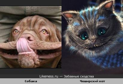 Собачка улыбается, как Чеширский кот.