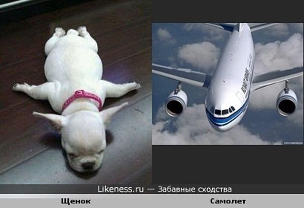 Щенок похож на самолет