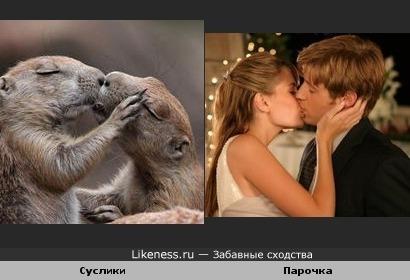 Суслики целуются, как люди.