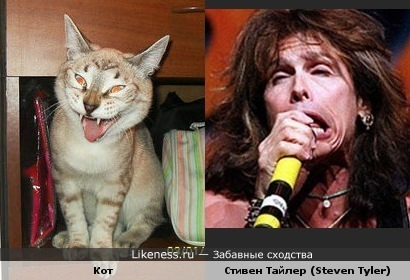 "Кот зевает, как солист группы ""Aerosmith"" поёт."