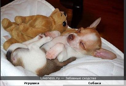 Собака и игрушка похожи.