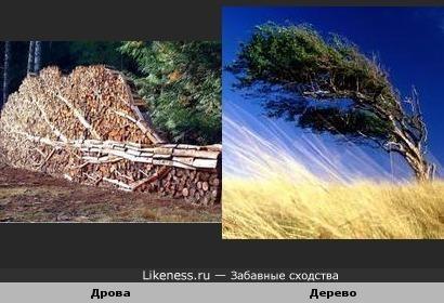 Дрова и дерево похожи.