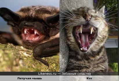 Разные животные похожи зубками