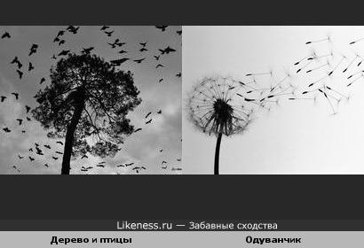Птицы и дерево похожи на одуванчик
