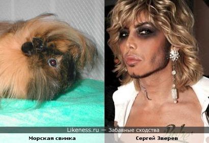 У морской свинки стилист Сергей Зверев.