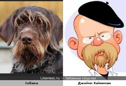"""Собака смахивает на шарж Джейми Хайнемана (""""Разрушители легенд"""")"""