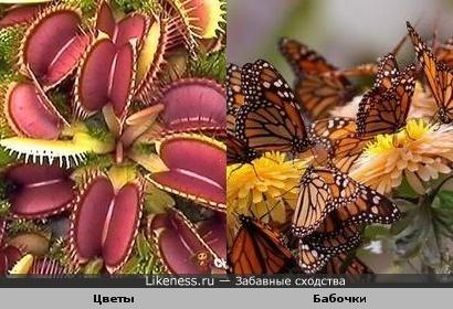 Цветы напомнили бабочек