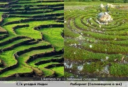Террасированные сельскохозяйственные угодья Индии похожи на древний лабиринт на Соловецких островах.