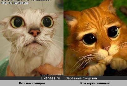 Два кота похожи.