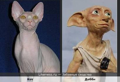 Кот и Добби похожи
