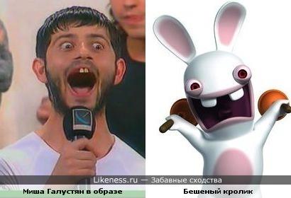 Миша похож на Бешеного кролика!