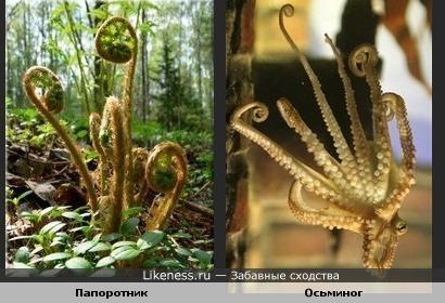 Побеги папоротника похожи на щупальца осьминога.