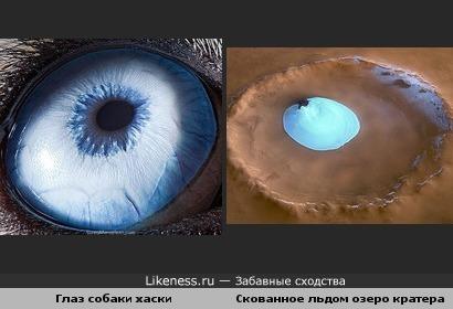 Глаз хаски похож на кратер.
