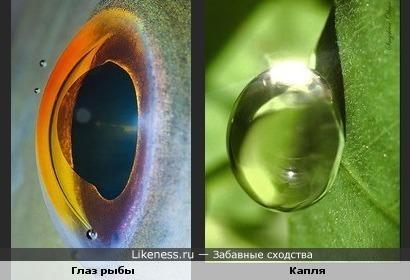 Глаз рыбы похож на каплю