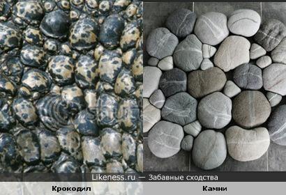 Чешуя крокодила похожа на камни.