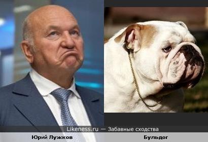 Юрий Лужков и бульдог