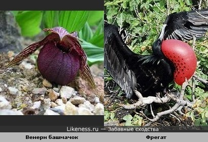 Цветок и птица