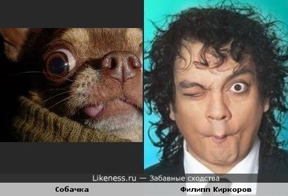 Собачка и Филипп Киркоров корчат рожи!