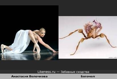 Танец богомола?