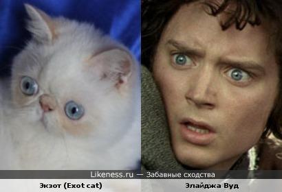 Еще котик похож на Элайджа Вуда