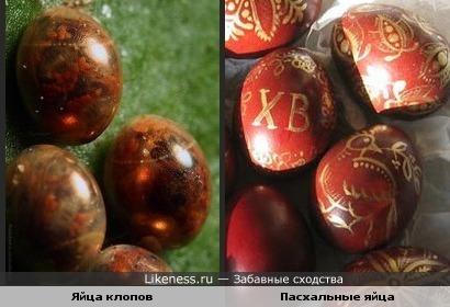 Яйца клопов похожи на выкрашенные пасхальные яйца.