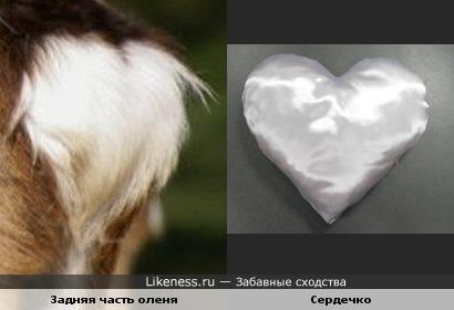 У олня тоже есть сердечко!