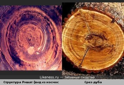 Структура Ришат похожа на срез дерева.
