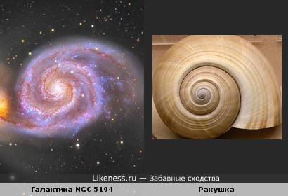 Галактика похожа на ракушку.