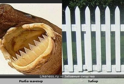 Зубки, как забор!